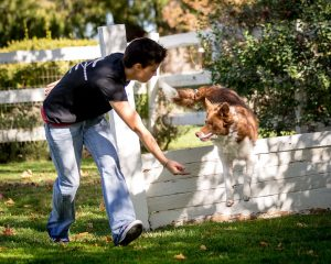 dog hurdle with trainer