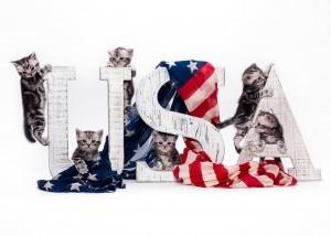 milla's kats kittens